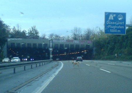 hund auf autobahn düsseldorf